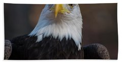 Bald Eagle Looking Right Beach Towel