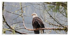 Bald Eagle Resting Beach Towel