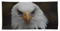 Bald Eagle Stare  Beach Towel