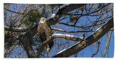 Bald Eagle Watching Her Domain Beach Sheet
