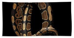 Ball Or Royal Python Snake On Isolated Black Background Beach Sheet by Sergey Taran