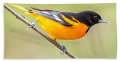 Baltimore Oriole Beach Sheet by Paul Freidlund