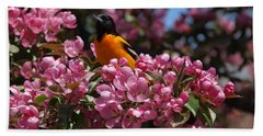 Baltimore Oriole Beach Sheet by Susan Dimitrakopoulos