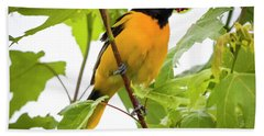 Beach Sheet featuring the photograph Baltimore Oriole With Raspberry  by Ricky L Jones