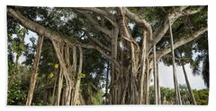 Beach Towel featuring the photograph Banyan Tree At Bonnet House by Belinda Greb