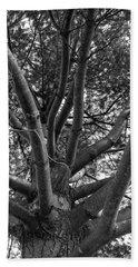 Bare Tree Beach Sheet