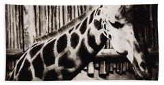 Baringo Giraffe Chicago Beach Towel