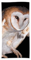 Barn Owl Beach Sheet