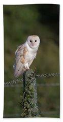 Barn Owl On Ivy Post Beach Towel