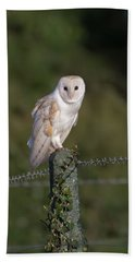 Barn Owl On Ivy Post Beach Sheet