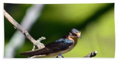 Barn Swallow Beach Sheet by Kathy Eickenberg
