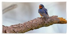Barn Swallow On Assateague Island Beach Towel by Rick Berk