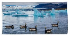 Barnacle Geese In Glacier Lagoon In Iceland Beach Towel by Matthias Hauser