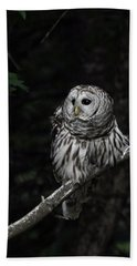 Beach Sheet featuring the photograph Barred Owl 2 by Glenn Gordon