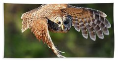 Barred Owl Flying Toward You Beach Towel