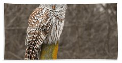 Barred Owl Beach Sheet