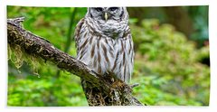 Barred Owl Beach Sheet by Michael Cinnamond