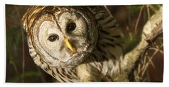 Barred Owl Peering Beach Towel