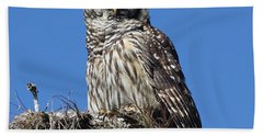 Barred Owl Portrait Beach Towel