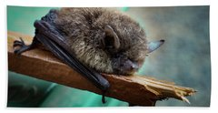 Beach Towel featuring the photograph Bat Rehoused by Jean Noren
