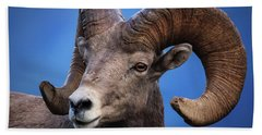 Battle Worn Bighorn Sheep Beach Towel