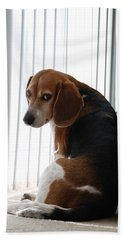 Beach Sheet featuring the photograph Beagle Attitude by Jennifer Ancker