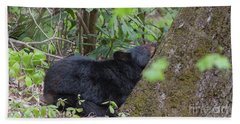 Beach Towel featuring the photograph Bearly Awake by Chris Scroggins