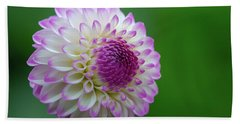 Beautiful Dahlia 1 Beach Towel