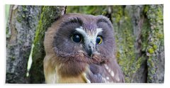 Beautiful Eyes Of A Saw-whet Owl Chick Beach Towel