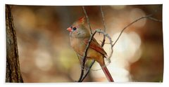 Beach Towel featuring the photograph Beautiful Female Cardinal by Darren Fisher