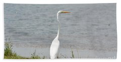 Beach Sheet featuring the photograph Beautiful Male Egret by Maria Urso