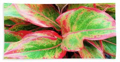 Beach Towel featuring the photograph Beautiful Red Aglaonema by Ray Shrewsberry