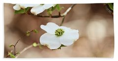 Beautiful White Flowering Dogwood Blossoms Beach Sheet by Stephanie Frey