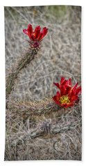 Beach Towel featuring the photograph Cholla's In The Desert by Elaine Malott
