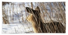 Bedded Fawn 2 Beach Towel by Brook Burling