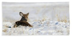 Bedded Fawn In Snowy Field Beach Sheet