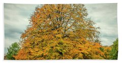 Beech Tree In Autumn Beach Towel by Mike Santis