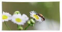 Beetle Daisy Beach Towel