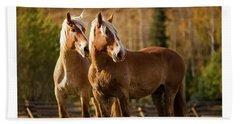 Beach Towel featuring the photograph Belgian Draft Horses by Sharon Jones