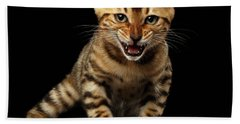 Bengal Kitty Stands And Hissing On Black Beach Sheet by Sergey Taran