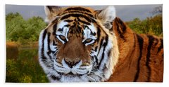 Bengal Tiger Portrait Beach Towel