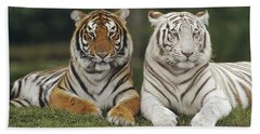 Beach Towel featuring the photograph Bengal Tiger Team by Konrad Wothe
