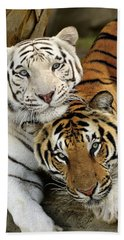 Bengal Tigers At Play Beach Sheet