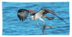 Best Osprey With Fish In One Talon Beach Sheet by Jeff at JSJ Photography