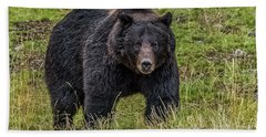 Big Black Grizzly Boar Beach Sheet by Yeates Photography