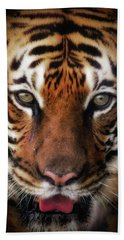 Big Cat Stare Down Beach Towel