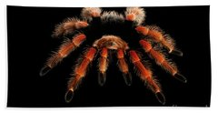 Beach Towel featuring the photograph Big Hairy Tarantula Theraphosidae Isolated On Black Background by Sergey Taran