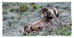 Beach Towel featuring the photograph Big Horn Sheep #2 by Scott Read