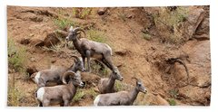 Big Horn Sheep Family Beach Sheet