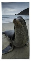 Big Seal Beach Towel